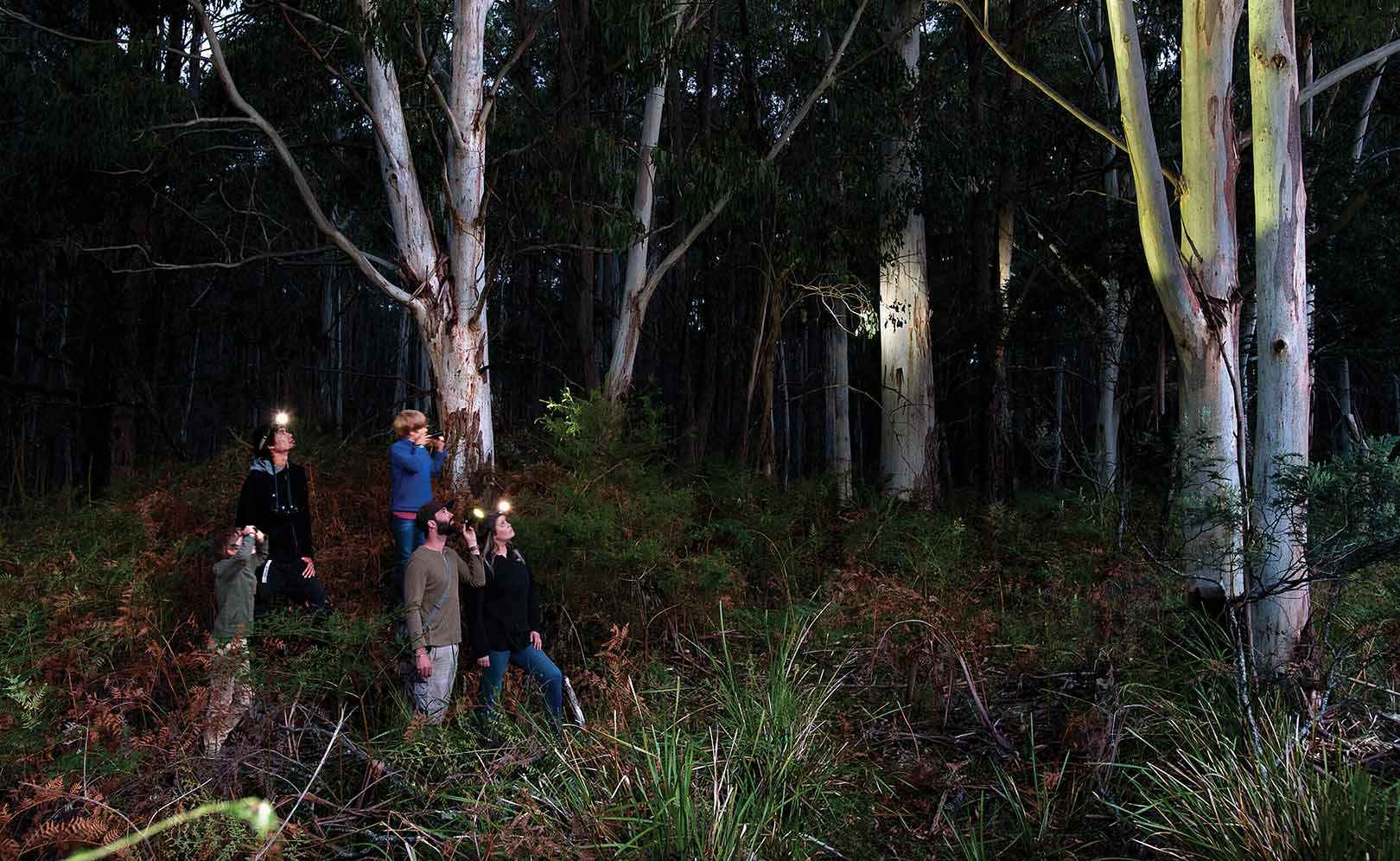 From left, Ari, Ziggy and Manu Scheltema, Brad Blake and Lindsey Dobeson spotlighting for greater gliders in the Wombat Forest near Trentham.