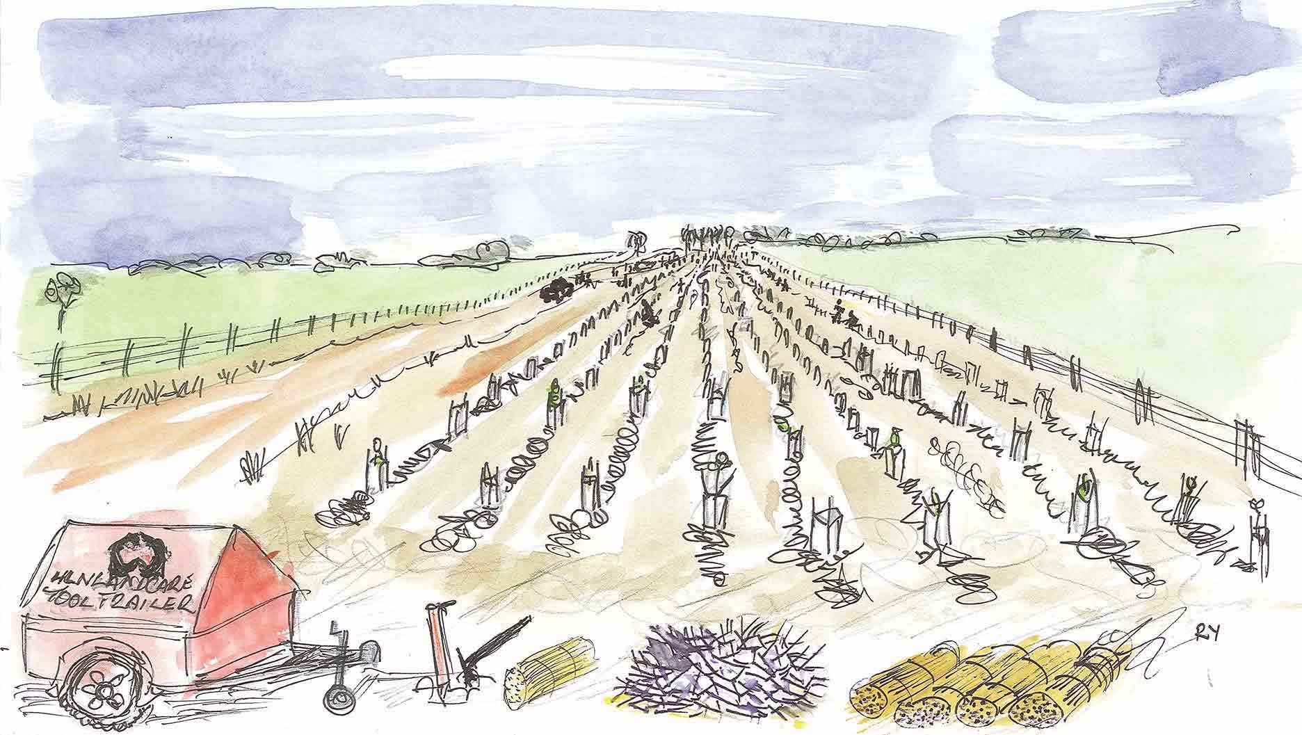 A Project Hindmarsh planting day at Nhill in 2012. Illustration by Rob Youl.