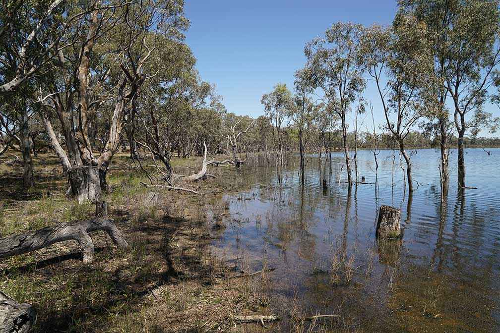 Little Lake Meran in northern Victoria is a WetMAP monitoring site which receives environmental water.