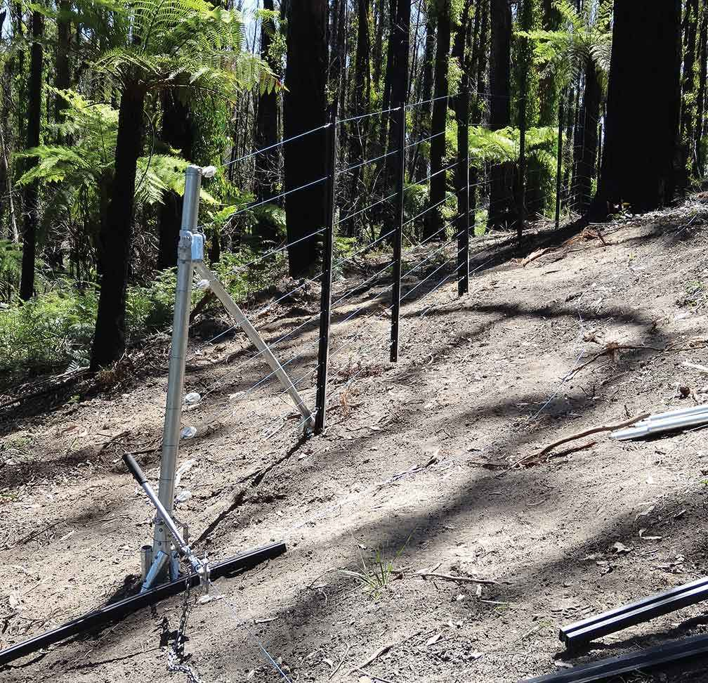 A section of the deer exclusion fence constructed around the fern gully.