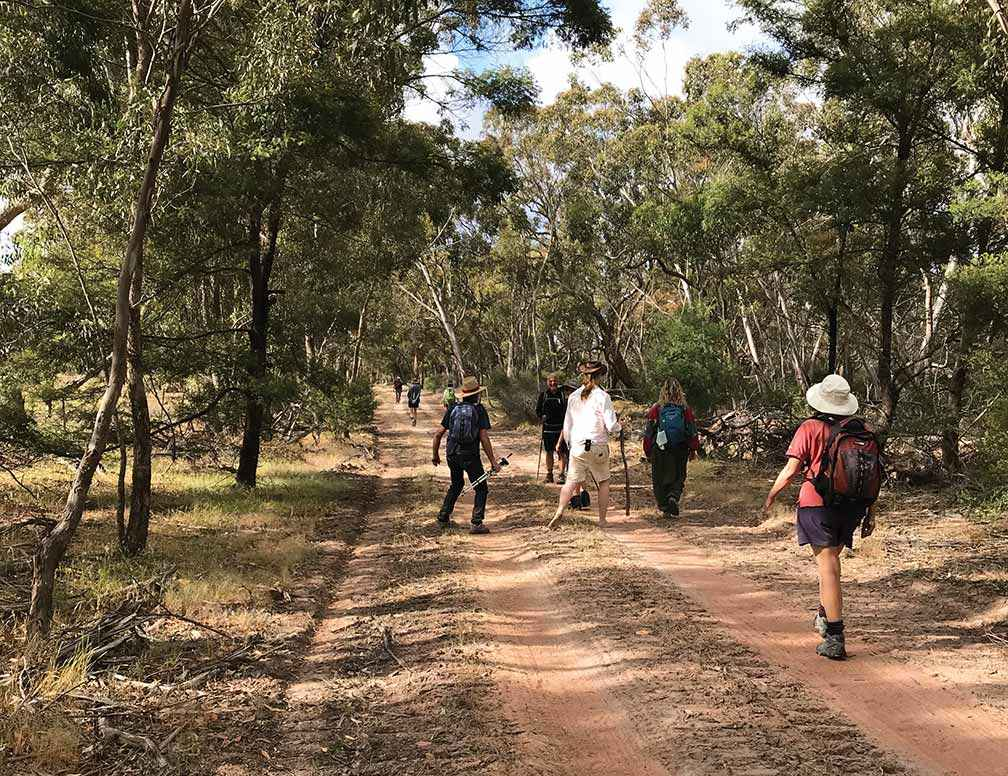 Lake Bolac Eel Festival Healing Walk progressing through woodland.