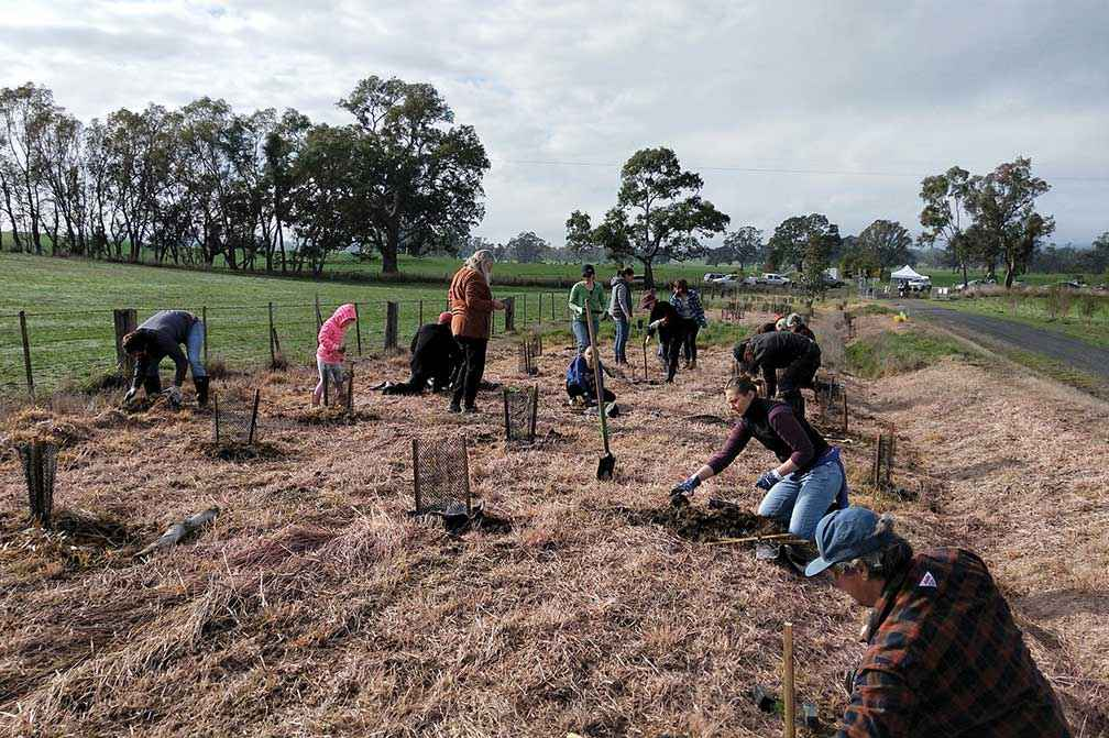 More than 60 volunteers planting along the Great Victorian Rail Trail near Mansfield in 2019.