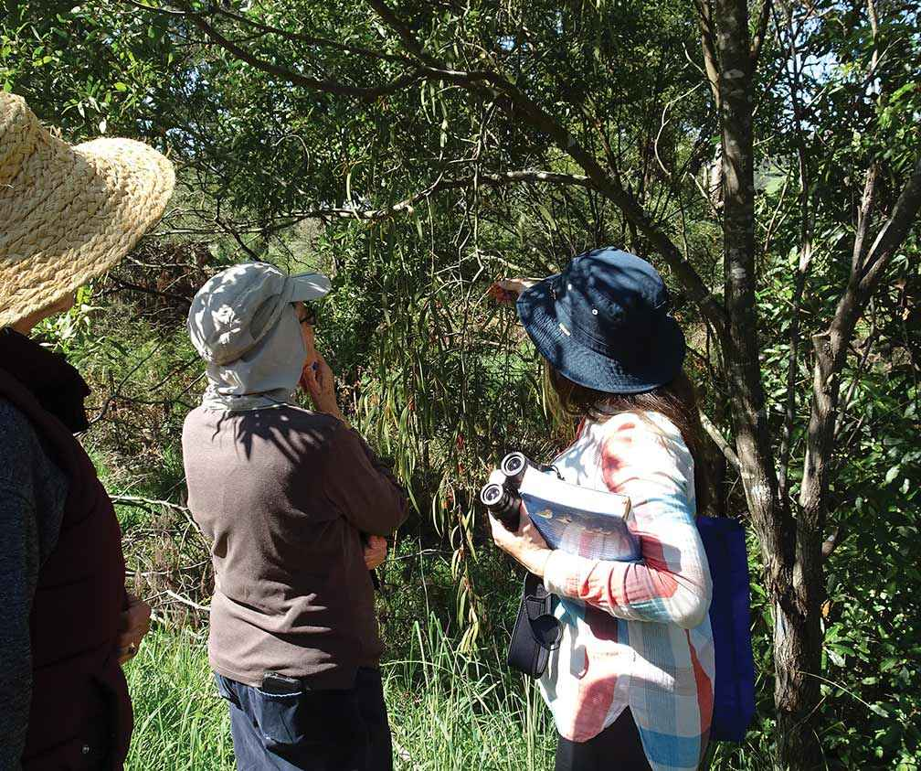Members of the Nerrena/Tarwin Valley Landcare Group discussing mistletoe at a recent bird monitoring session.