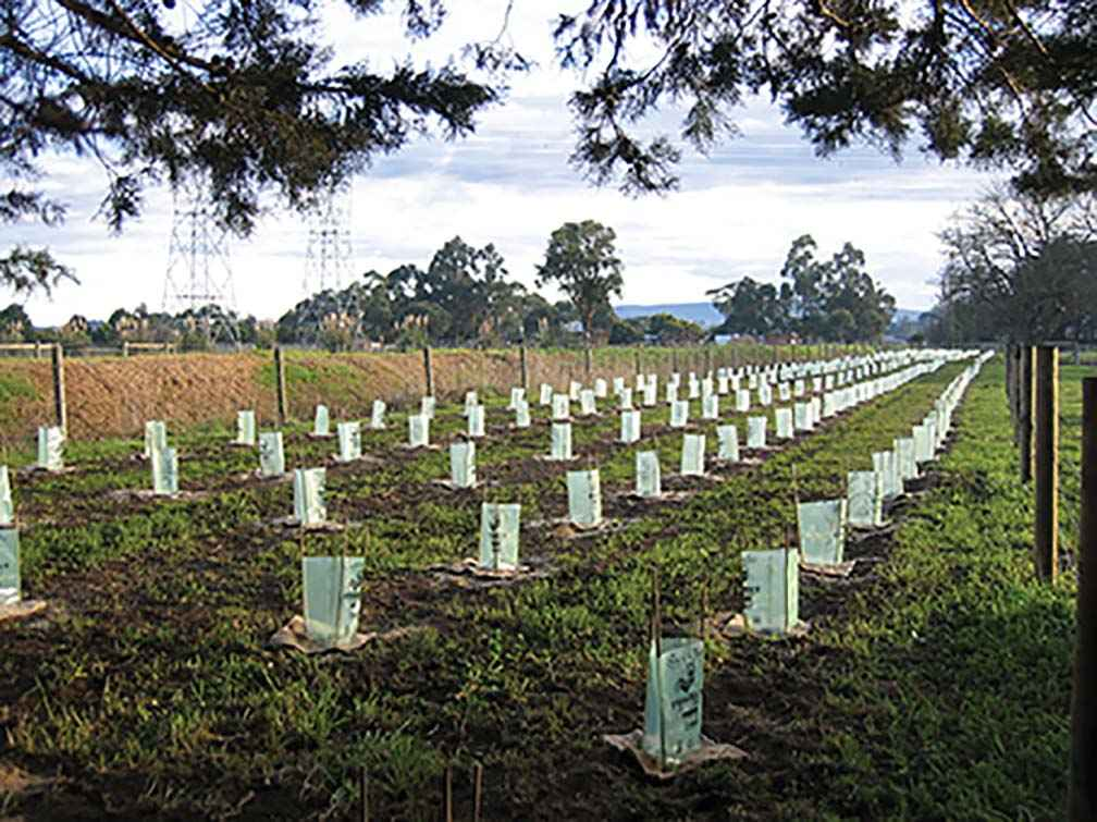 Landcare in action at Scott Bentley's farm in 2002. More than 500 trees were planted ready to become a shelter belt and provide habitat for native species.