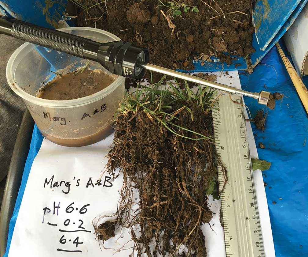Dreadlock roots were evident in samples taken from Hillside Manor at Warrenbayne, near Violet Town, in July 2017.