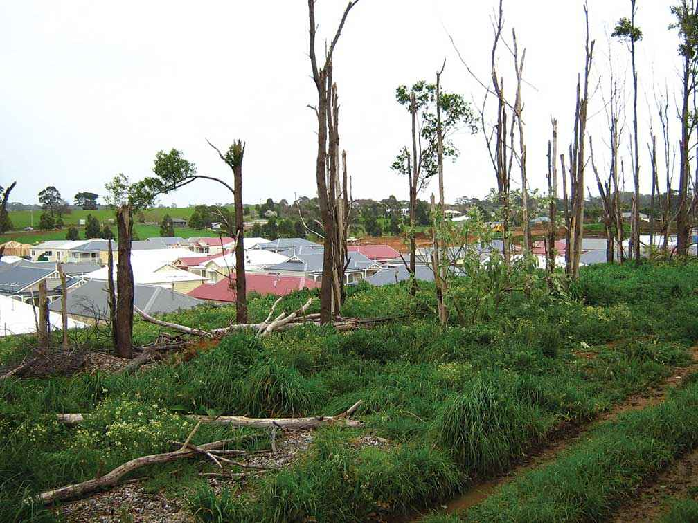 A section of land on the boundary of the Lifestyle Village Warragul before the clean-up and rehabilitation began.