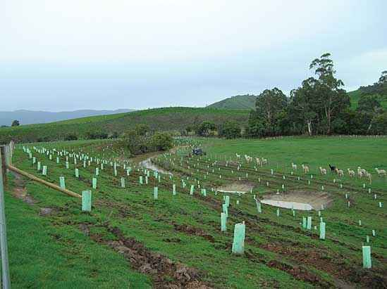 A Strath Creek Landcare Group revegetation project to protect an old course of the King Parrot Creek in 2008.