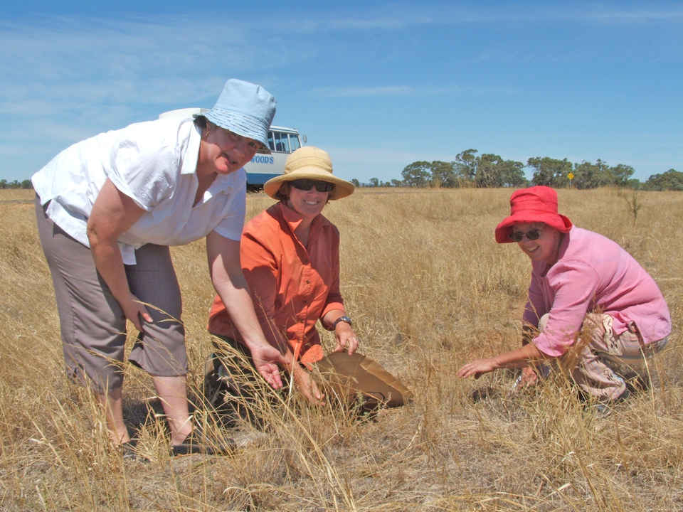 Ann Dunstan, Liz Russell and Barbara Robertson collect seeds.jpg
